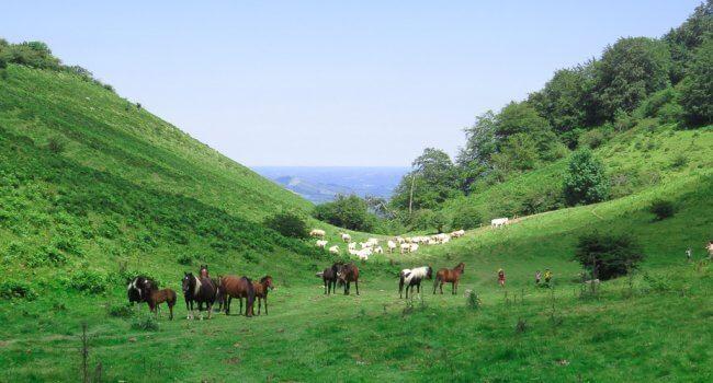 LA SOULE TRAPPEUR : une itinérance en Pottok de ferme en ferme