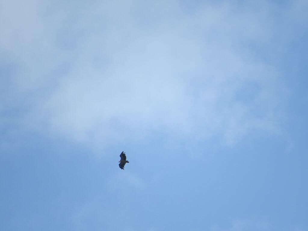 oberver de loin les vautours