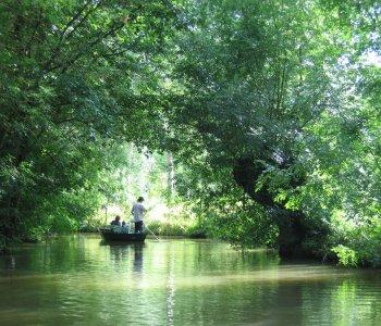 balade en barque à la venise verte